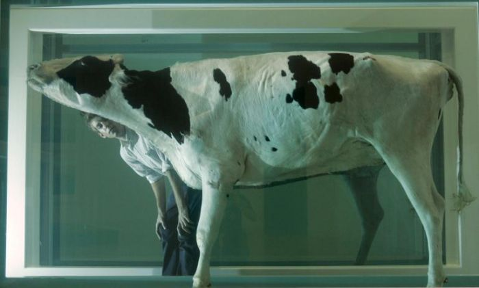 hirst-mucca